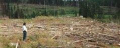 Habitantes de San Miguel retienen a poblador de Sinicahua por talar árboles