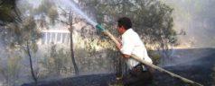 Arrasa el fuego cinco hectáreas de árboles en Tlaxiaco