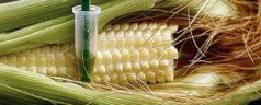 En Oaxaca reparten semilla a 12 mil productores; Monsanto será la principal beneficiaria