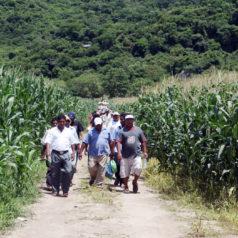 Presenta SEDAFP proyecto piloto de maíz de alto rendimiento en la Costa