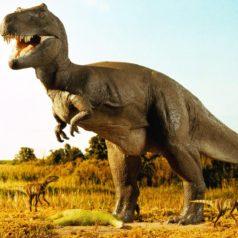 Científicos confirman que los T-rex fueron las criaturas con la mordedura más potente en la Tierra