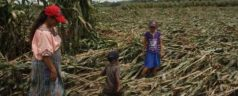 Perdidas 33 hectáreas de cultivo por estragos de la naturaleza en Tlaxiaco