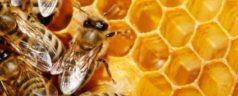 Productores mixtecos logran exportar miel a Alemania