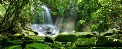 Oaxaca, entidad con mayor biodiversidad del país