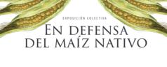 Albergará CaSa la exposición colectiva 'Maíz Nativo vs Maíz Transgénico'