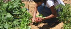 Proyecto Estratégico de Seguridad Alimentaria beneficiará a familias Mixtecas